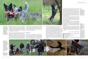 Hunde im Einsatz - die Käferjäger-2